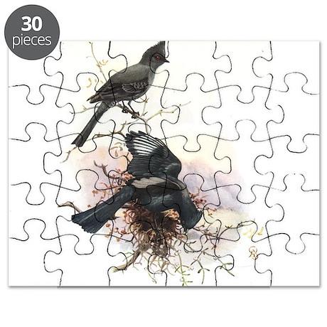Phainopepla Puzzle