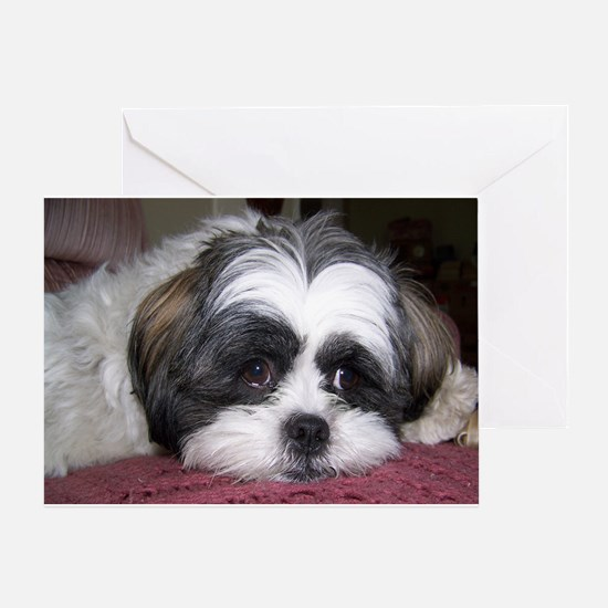 Cute Shih Tzu Dog Greeting Card