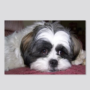 Cute Shih Tzu Dog Postcards (Package of 8)
