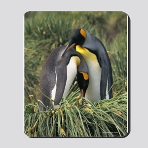 King Penguin Lovers Mousepad