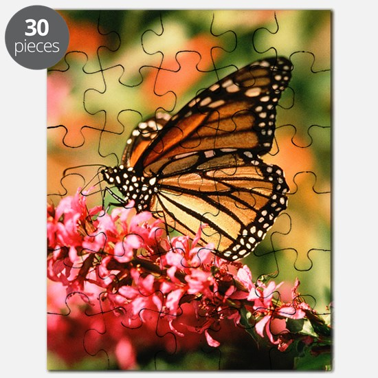 Colorful Butterfly Puzzle