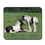 Gypsy Horse Foals Sharing Secrets Mousepad