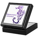 Sea horse Keepsake Box