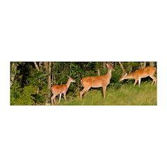 American White Tail Deer Buck Wall Decal