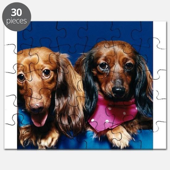 Dachshunds (photo) Puzzle