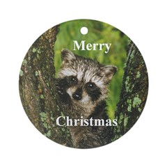 Baby Raccoon Ornament (Round)
