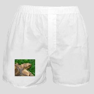.tortoise. Boxer Shorts