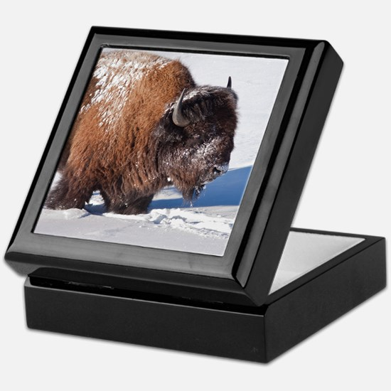 Cool Fur Keepsake Box