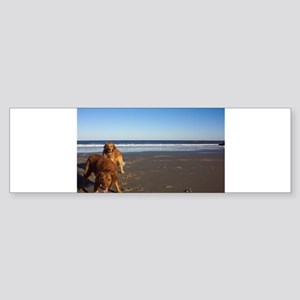 Anticipation Golden Retriever Sticker (Bumper)