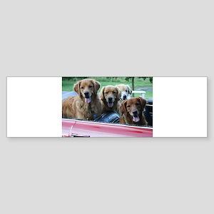 Golden Retriever Summer Drive Sticker (Bumper)