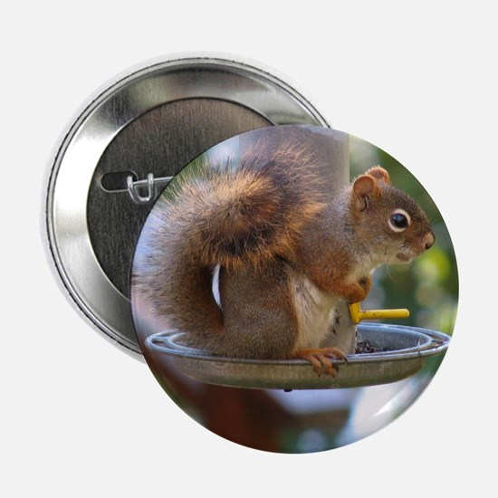 Red Squirrel I Button