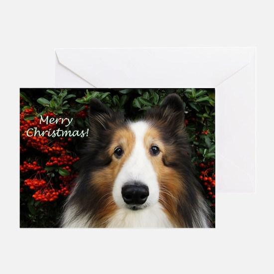 Merry Christmas Sheltie Greeting Card