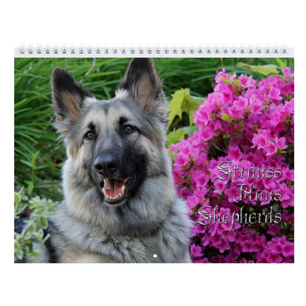 strauss haus 2012 wall calendar by shilohshepherds. Black Bedroom Furniture Sets. Home Design Ideas