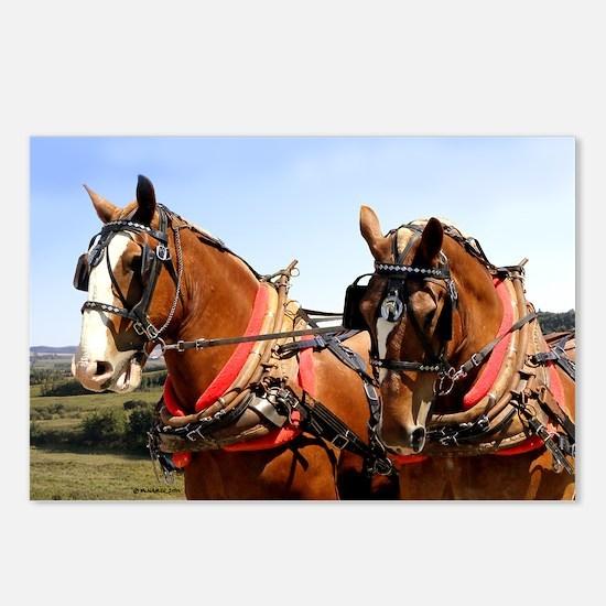 Belgian Horses Postcards (Package of 8)