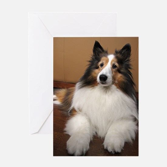 All Sheltie Greeting Card