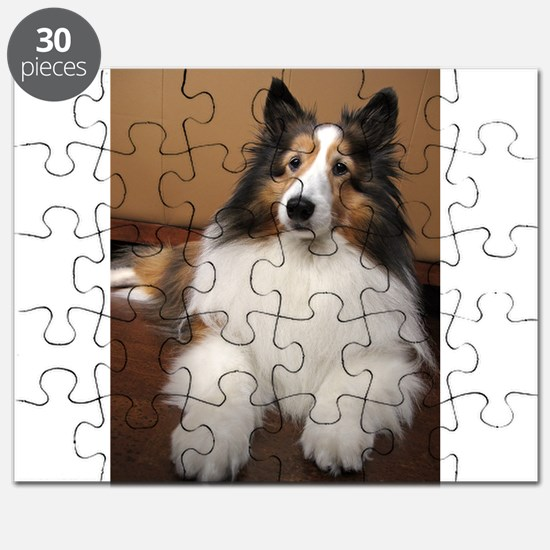 All Sheltie Puzzle