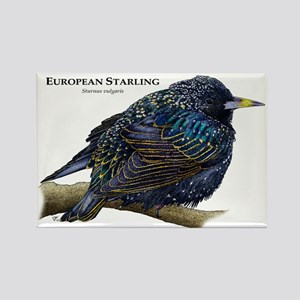 European Starling Rectangle Magnet