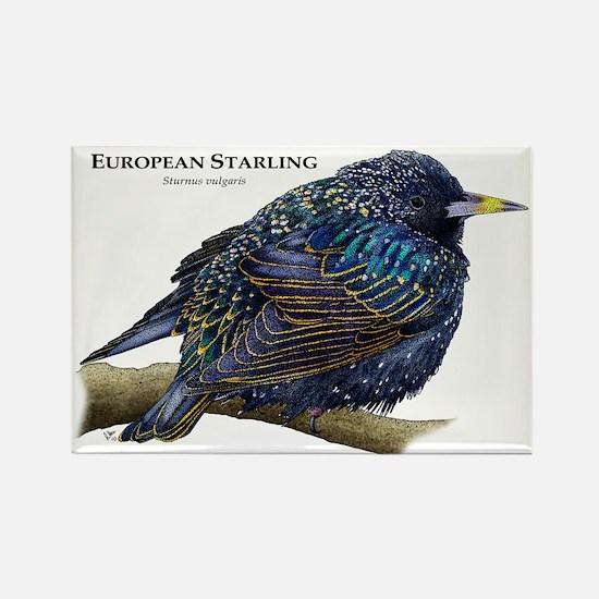 European Starling Rectangle Magnet
