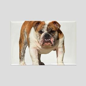 Bulldog Items Rectangle Magnet