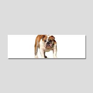 Bulldog Items Car Magnet 10 x 3