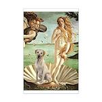Venus - Yellow Lab #7 Mini Poster Print