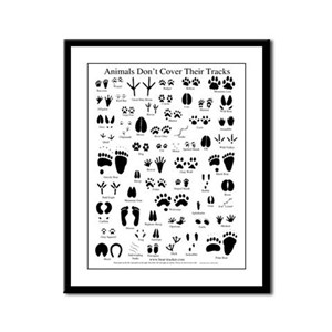 North American Animal Tracks Framed Panel Print