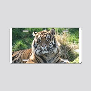 Helaine's Tiger Aluminum License Plate
