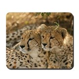 Cheetah Mouse Pads