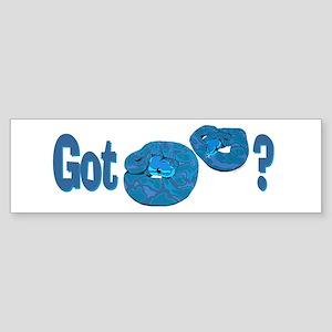 Got Blue Ball (Pythons)? Bumper Sticker