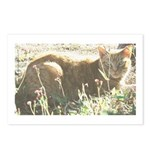 Tabby Cat Postcards (Package of 8)