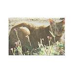 Tabby Cat Rectangle Magnet (100 pack)
