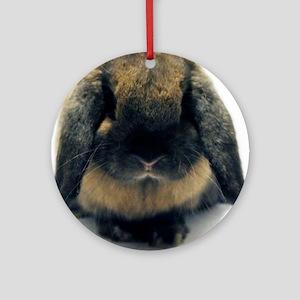 b55896e4203 Holland Lop Rabbit Ornaments - CafePress