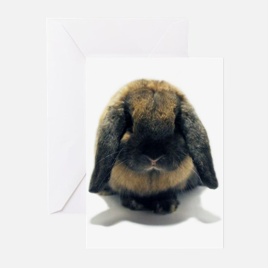 Holland Lop Rabbit Tort Greeting Cards (Pk of 10)