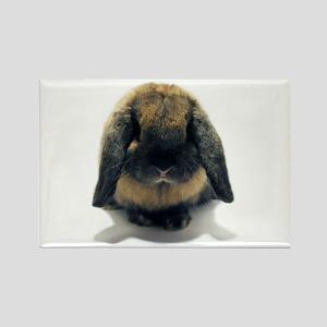 Holland Lop Rabbit Tort Rectangle Magnet