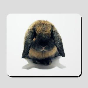 Holland Lop Rabbit Tort Mousepad