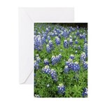Bluebonnets Greeting Cards (Pk of 20)