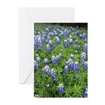 Bluebonnet Greeting Cards (Pk of 10)