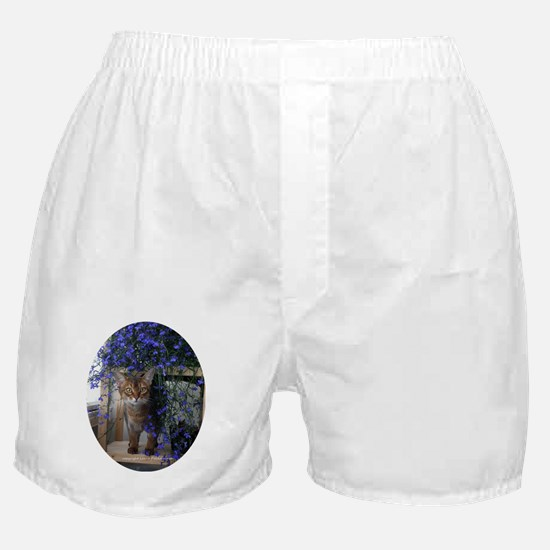 Flower Cat Oval Boxer Shorts