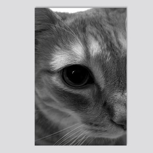 Cat Face Postcards (Package of 8)