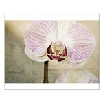Pink Orchid Petal Small Poster