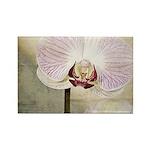 Pink Orchid Petal Rectangle Magnet (100 pack)