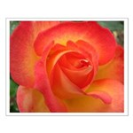 Coral Rose Small Poster