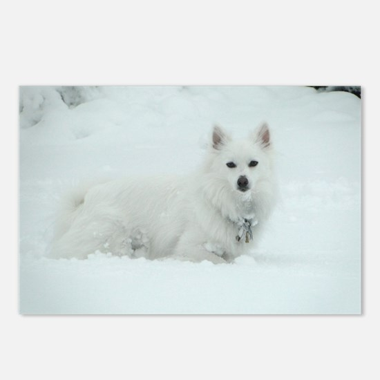 American Eskimo Dog Snow Day Postcards (Package of