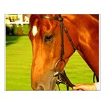 horse Small Poster