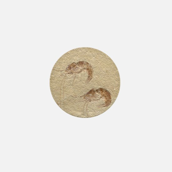 Pair of Fossilized Shrimp Mini Button