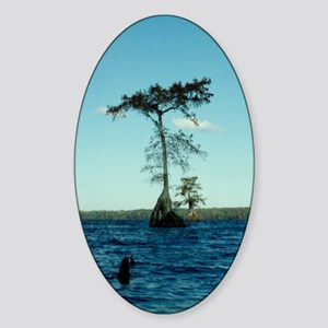 Cypress Tree Sticker (Oval)