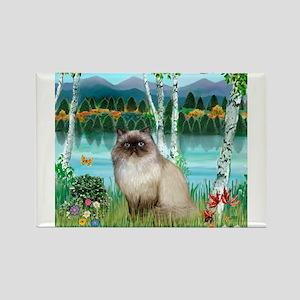 Birches / Himalayan Cat Rectangle Magnet