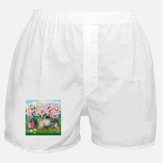 Blossoms & Himalayan cat Boxer Shorts