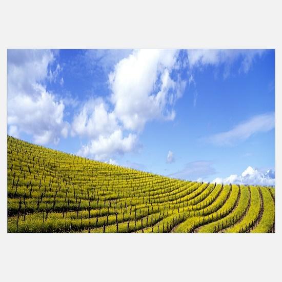 California, Napa Valley, mustard