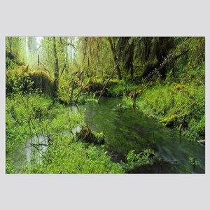 Hoh Rain Forest Olympic National Park WA